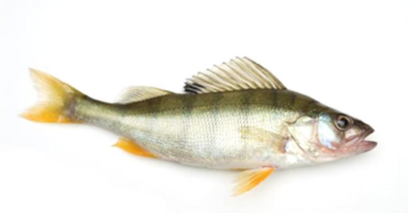 Ravioli al pesce persico